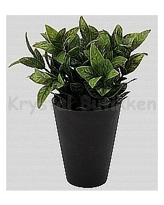 Grøn busk c