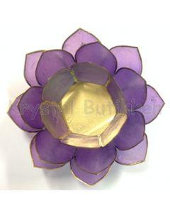 lotus lys lilla