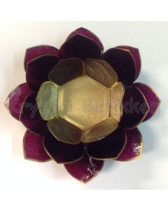 lotus lavendel