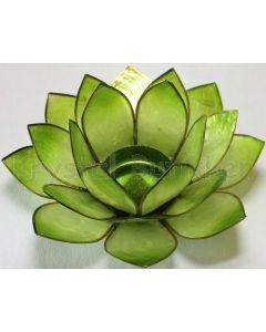 Lotus stage gul