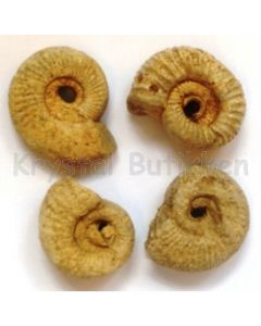 Ammonit rå